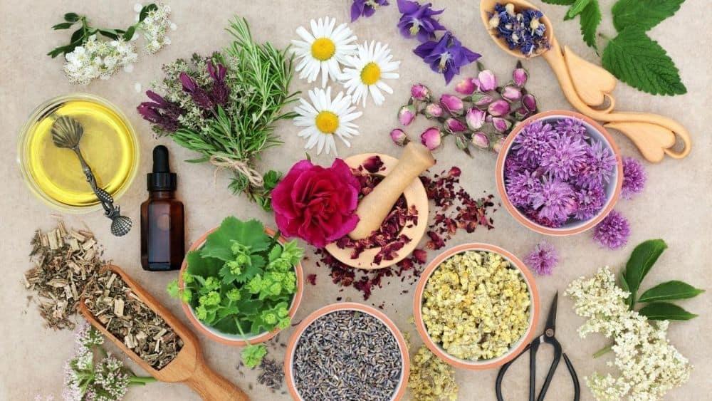 9 herbes pour calmer les nerfs et l'anxiété